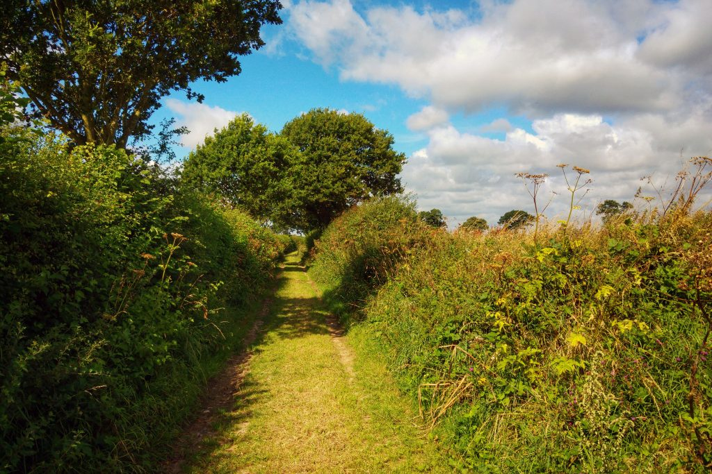Morning run - footpath near Horning. Norfolk Broads Caravan Club Site, Ludham, Wroxham, Thursday 4th August 2016.