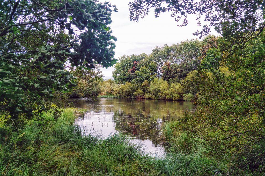 Afternoon run - lake on Caravan site. River Breamish Caravan Site, Ingram, Alnwick, Thursday 11th August 2016.